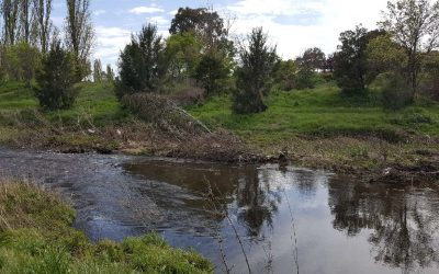 Connecting with nature along Queanbeyan River